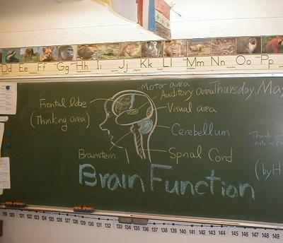 Brain_function